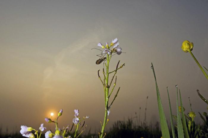 Photo of Cranefly on flower by Edwin Brosens