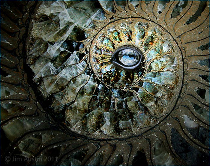 Photo of ammonite and eye layered in Adobe Photoshop CS5 by Jim Austin