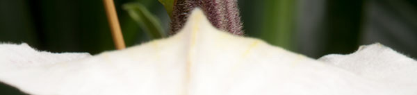 Screen capture of macro orchid photo used for Focus Stacking by Brad Sharp