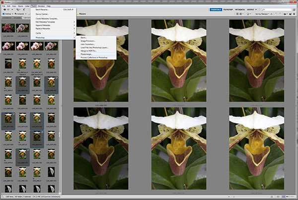 Screen capture of orchid photos selected in Photoshop Brdige for Focus Stacking by Brad Sharp