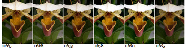 Screen capture of 6 orchid photos used for Focus Stacking by Brad Sharp
