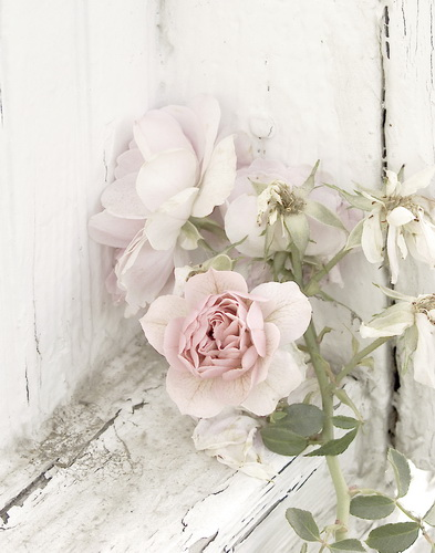 """Well exposed, artistic"""" high key"""" photo of roses by Michael Fulks."""