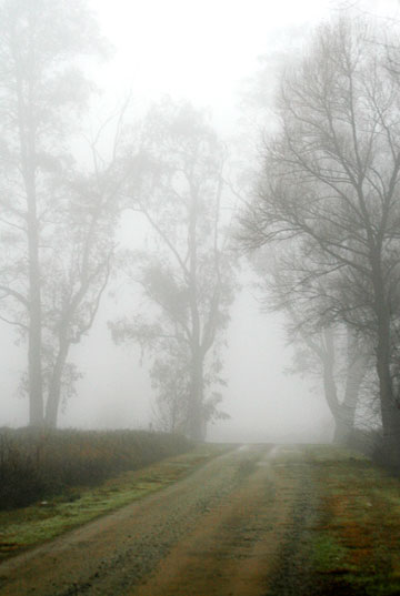 Photo of path and trees in fog light by Noella Ballenger