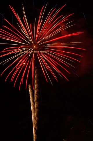 Fireworks image that looks like a big red flower with a gold stem by Marla Meier.