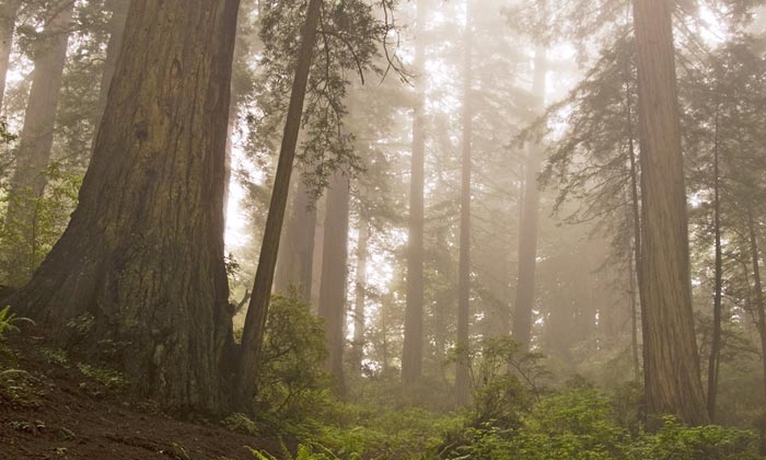Photo of Damnation Creek Trail in Fog by Robert Hitchman