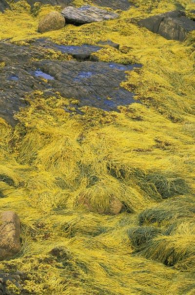 "Photo of ""Blue Rocks"" in Lumenburg, Nova Scotia by Mike Goldstein"
