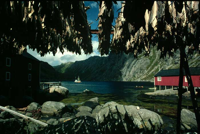 An interrupted horizon line in a photo of lake, mountains, tree and building by Gert Wagner.