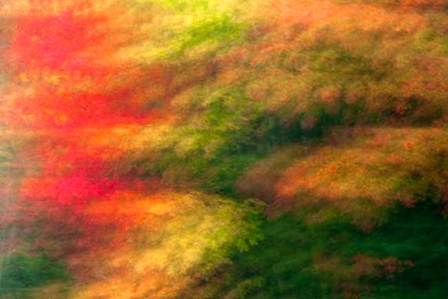 Backyard Photography: Blurred photo effect of orange, red and gold fall foliage by Randall Romano