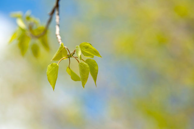 Backyard Photography: Close-up image of a lime green leaf on a tree branch by Randall Romano