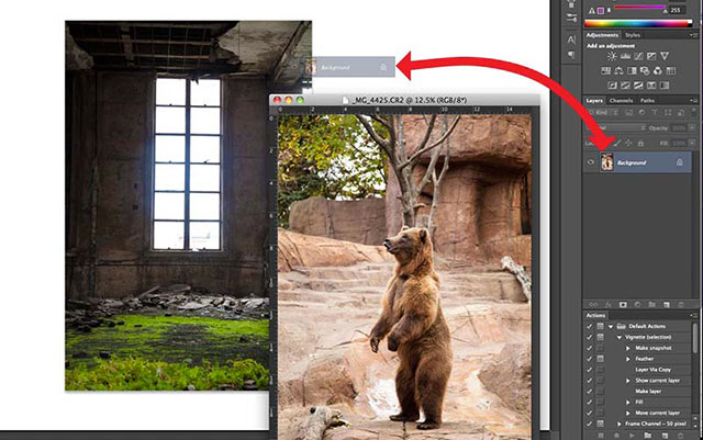 "Photoshop screen shot of dragging and dropping a bear image into another image file to create the ""Story Teller"" by Katelin Kinney."
