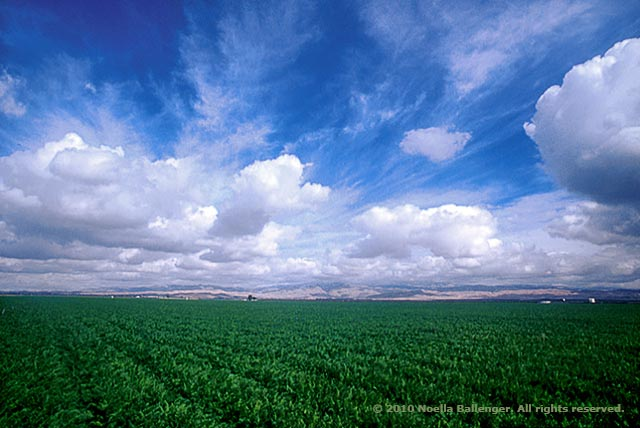 Photo of alfalfa field and blue clouidy skies in Central Valley, California with great depth of field by Noella Ballenger.