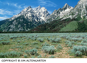Grand Tetons with foreground grasses with a strong top-weighted horizontal line by Jim Altengarten.