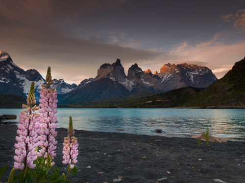 Photo of flowers, lake and mountains in Patagonia by Michael Leggero.