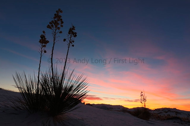 Cactus at White Sands in New Mexico showing and automated watermark by Andy Long.
