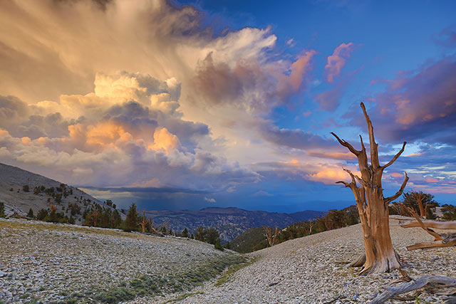 Soul of Life: image of single dead tree and landscape with sun on thunderhead clouds in the background at White Mountains in California by Jeff Mitchum.