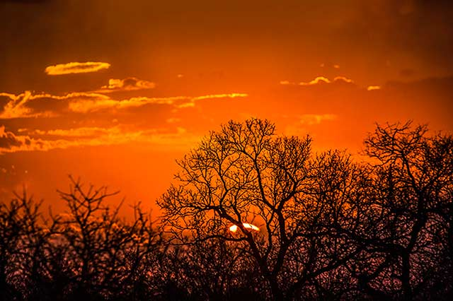 Brilliant red and orange sunset in Pilanesberg National Park in South Africa by Noella Ballenger.