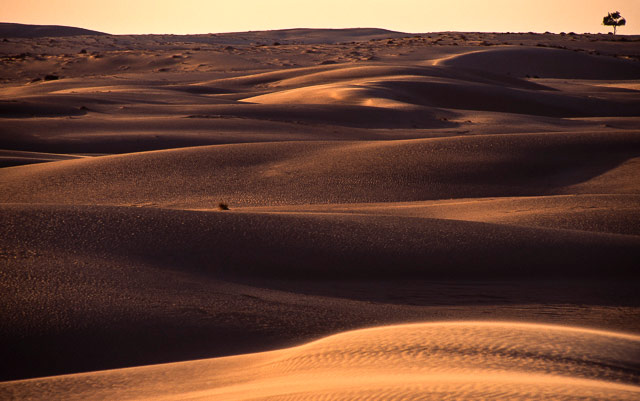 Image of the sand dune and a lone tree in Sinai, Egypt by Omar Attum.
