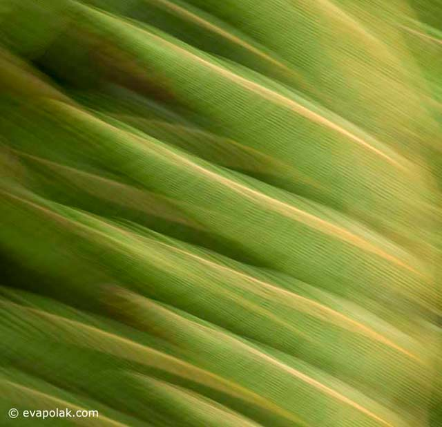 Image of blurred green and cold leaves showing regular rhythm by Eva Polak.