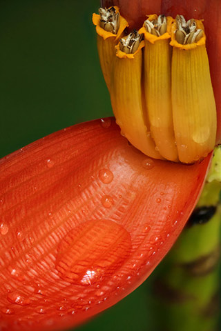 Close-up image of a red and yellow orange flower using depth of field focus stacking by Andy Long.