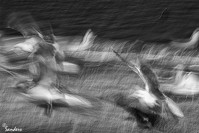 Photo Impressionism technique: blacka white image of people of birds in flight using camera shake to create motion and an impressionistic effect by Gerald Sanders.
