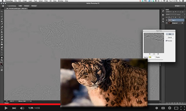 Screen shot of a leopard using Photoshop's high pass filter by Adam Furtado.