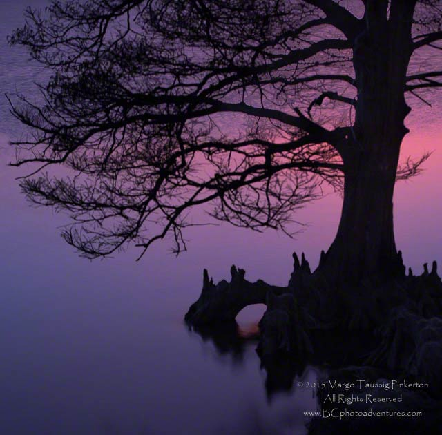 Silhouetted tree against a pink and purple sunset afterglow at the Outer Banks of North Carolina created by using a slow shutter speed in combination with a shallow depth of field by Margo Taussig Pinkerton.