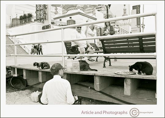 "Photo of ""Alley Cats"", Boardwalk, Atlantic City, New Jersey by Jim Austin"