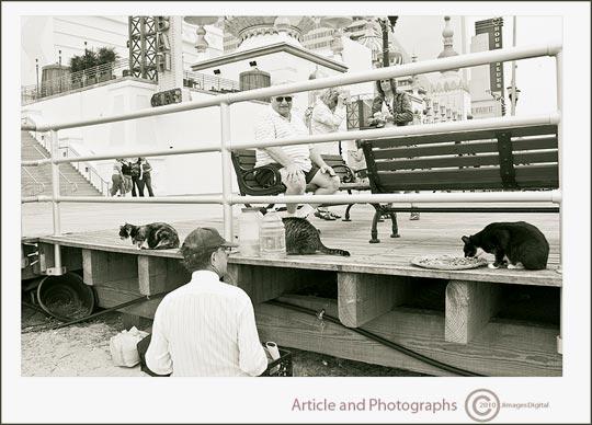 "Photo of ""Alley Cats"", Boardwalk,Atlantic City, New Jersey by Jim Austin"