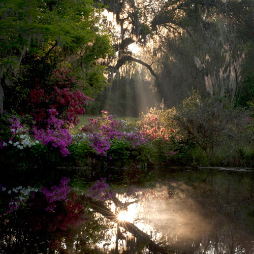 Landscape, flower and sunrise reflection photo by Phyllis Peterson