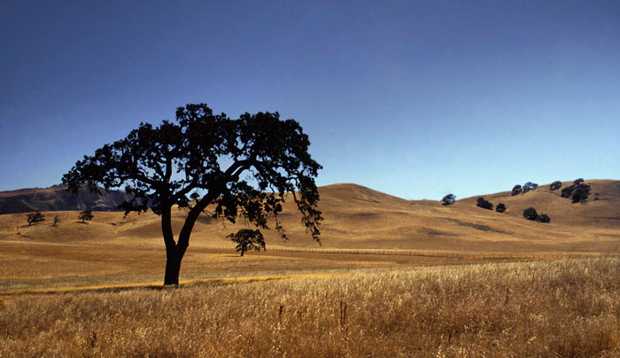 Landscape photo of tree on prairie land in Central Coastal Range, California by Noella Ballenger.