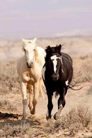 Wild Horses Photography Capturing The Action Apogee