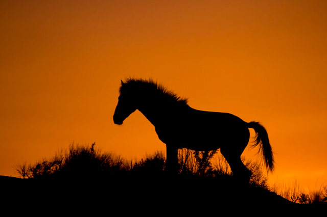 Action photography: silhouette of wild horse standing on a ridge at sunset at Sand Wash Basin in northwestern Colorado by Andy Long.