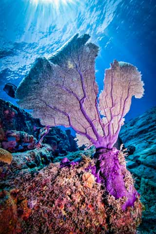 Underwater photo of colorful coral fan on the Sugar Wreck in the Bahamas by Mike Ellis.