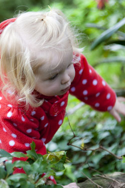 Close-up photo portrait of a toddler in a red and white polka dot top - outside crawling through plants by Cathy Topping.