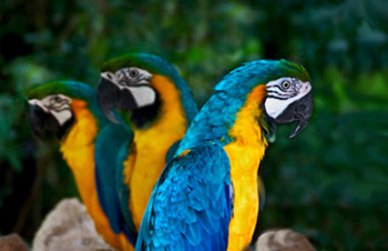 Photo of parrots by Noella Ballenger