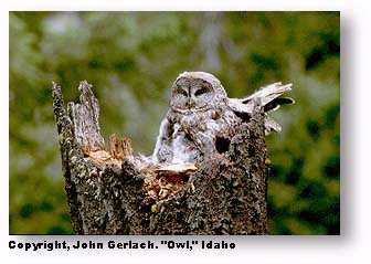 Camera grid lines: image of owl using rule of thirds by John Gerlach.