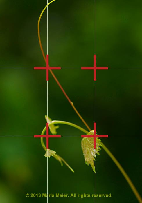 Camera grid lines: image of leaf showing placement using rule of thirds by Marla Meier.