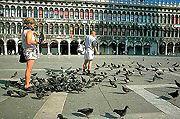 Pigeons2thumb.JPG (12452 bytes)