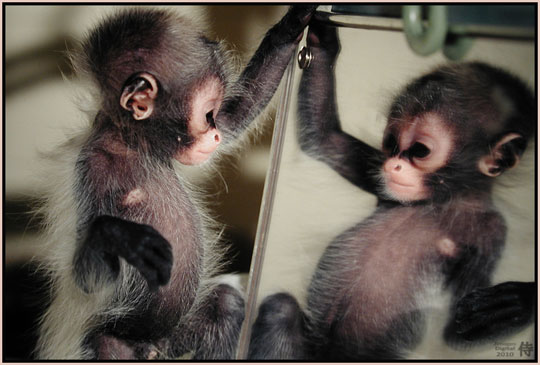 Photo of Monkey in the Mirror