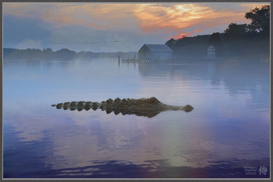 Photo of Alligator Country
