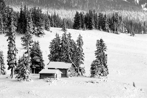 Black and white photo of cabin in woods by Andy Long