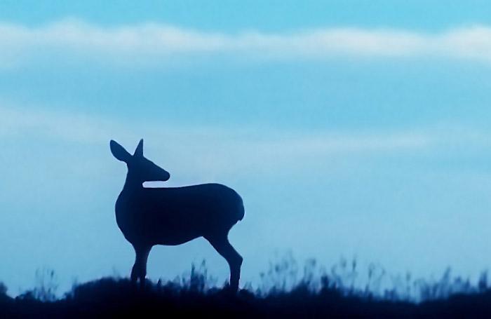 Silhouette photo of deer on hillside by Noella Ballenger