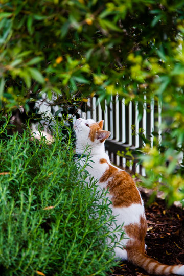 Photo of cat sniffing plants. Cat adopted from DCH Animal Adoptions in Sydney, Australia by Cathy Topping