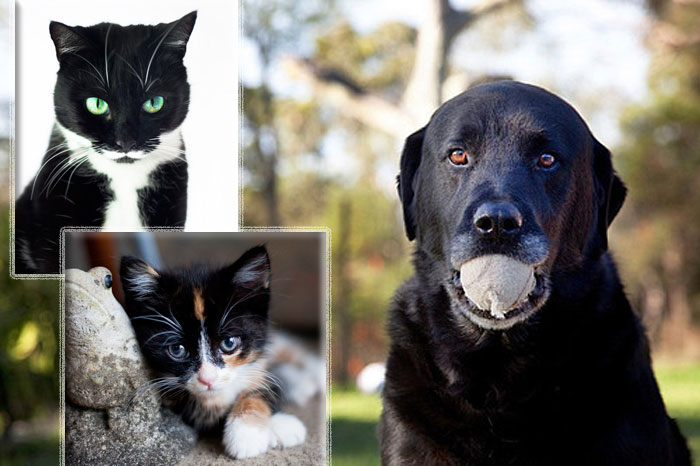 Photo of dog and kitties adopted from DCH Animal Adoptions in Sydney, Australia by Cathy Topping