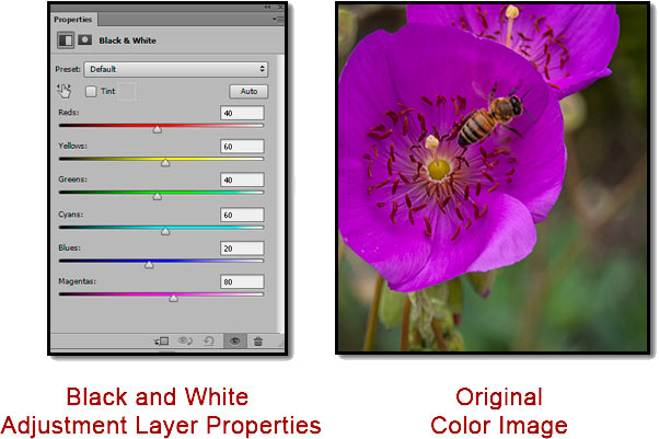 Screen shot of Photoshop Black & White Adjustment Layer and colored bee and flower by John Watts.