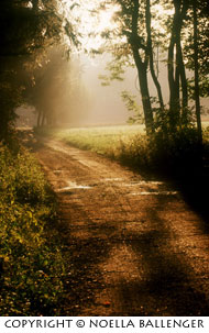 Early morning golden light and fog on path in the woods in Germany by Noella Ballenger.