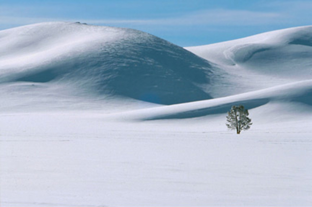 Landscape image of a lone tree in a blanket of snowy hills by Andy Long.