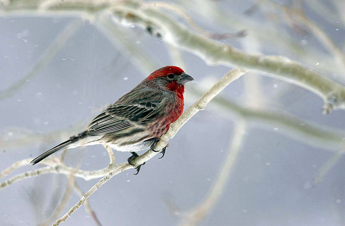 Photo of bird on branch while snowing by Andy Long