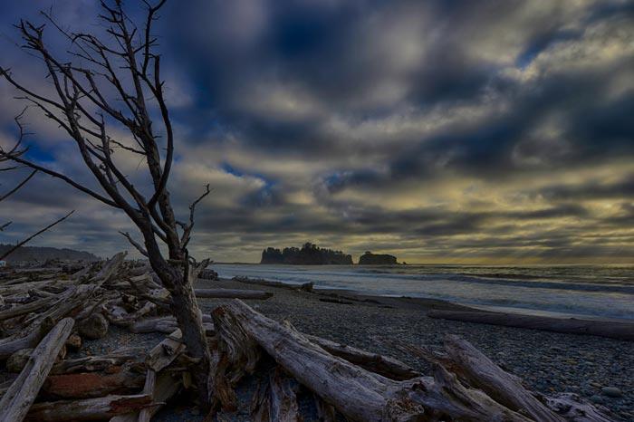 Photo of dead trees on Rialto Beachl on the Olympic Peninsula, Washington by Michael Leggero