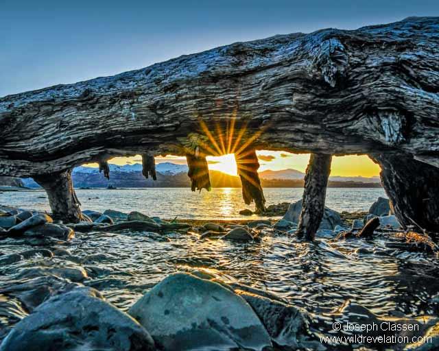 Sunset photo of dead fallen tree and sun, star burst rays at Isthmus Bay on Kodiak Island, Alaska by Joseph Classen.